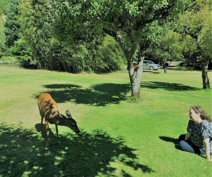 hanging with bambi.jpg