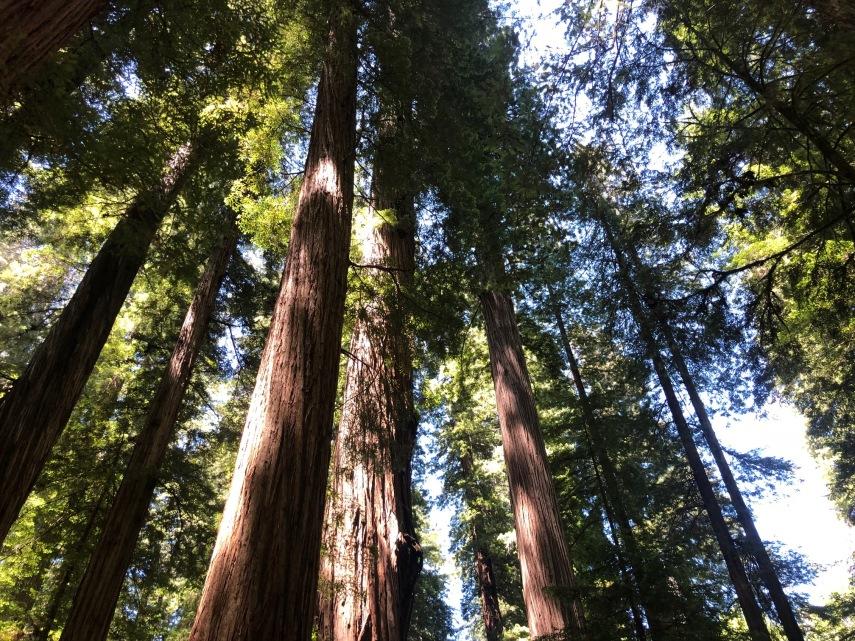 trees 1.jpg